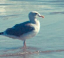 Seagull by Grant Lechner