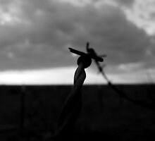 SILHOUETTE OF RUSTED BARBED WIRE by Sandra  Aguirre