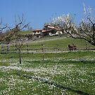Tuscan landscape in spring time by bertipictures