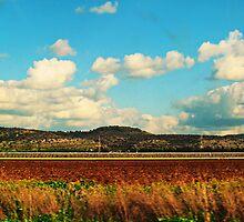 Layers fields by Orel