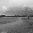 Grey Autumn  by phillip wise