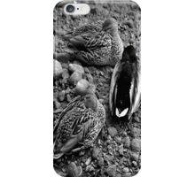 let sleeping ducks lie iPhone Case/Skin
