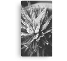 Cactus Species Canvas Print