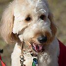 Melanoma March Canine by Ian McKenzie