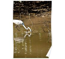 Great White Egret Fishing Poster