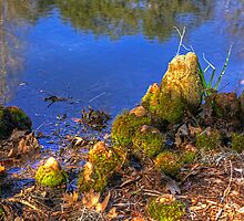 Cypress Knees by imagetj
