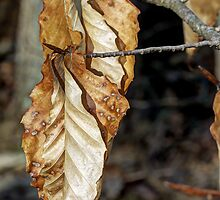 Old Leaves New Buds by MotherNature