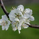 Spring, Spring, Spring,  by DebbyScott