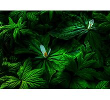 It's All About Spring Photographic Print