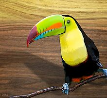 tucan by arteology