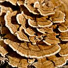 Wood Fungus by goddarb