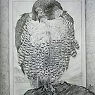 Peragrin Falkon. by Robert David Gellion