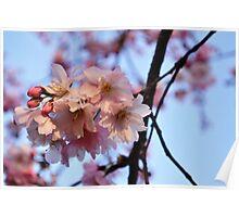 Cherry Blossoms & Blue Sky 2 Poster