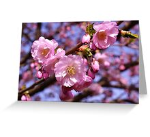 Cherry Blossoms & Blue Sky 3 Greeting Card