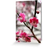 Japanese apricot tree Greeting Card