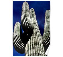 Saguaro and Deep Blue Sky Poster