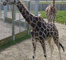 Giraffe by Elly190712