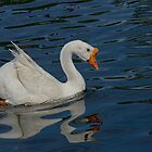 Swan-Goose by George I. Davidson