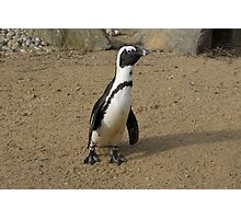 Penguin With A Long Neck Photographic Print