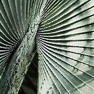 Shapes of Hawai'i - 4 by Ellen Cotton