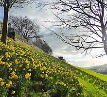 The Arrival Of Spring In Derry/Londonderry..........N Ireland by Fara