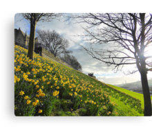 The Arrival Of Spring In Derry/Londonderry..........N Ireland Canvas Print