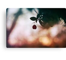 Winter berry Canvas Print