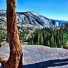 Yosemite park by cgarphotos
