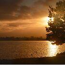 Shoreline Park Sunset. Mountain View, California by Igor Pozdnyakov