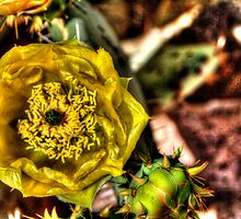 Yellow Cactus Flower by Roger Passman
