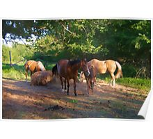 Ranch Horses Poster