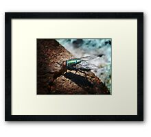 ©NS Green Fly IAT Framed Print