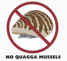 No Quagga Mussels by lugnutt