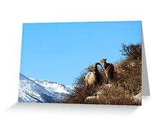 Big Horn Family  Greeting Card