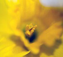 Daffodil-Heart-2100 by KAREN COLEBECK