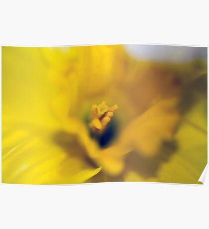 Daffodil-Heart-2100 Poster