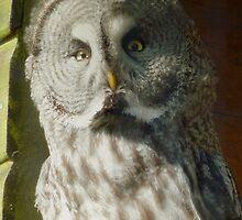 Great Owl by Ihazart