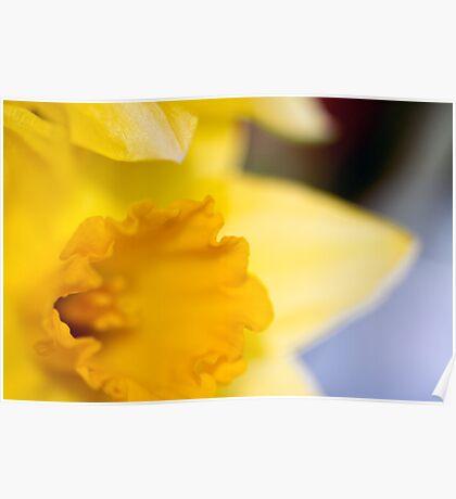 Daffodil-2102 Poster