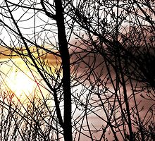 Budding Silhouettes by Lisa Taylor