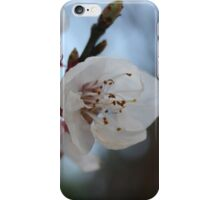 Close Up Apricot Blossom In Pastel Shades iPhone Case/Skin