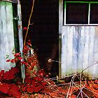 The Shed Out Back in Autumn by RC deWinter