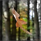 Hanging in the Balance by Deb  Badt-Covell