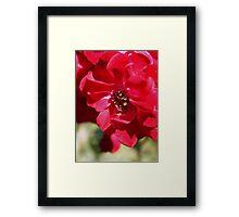 Red Flower Macro Framed Print