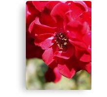 Red Flower Macro Canvas Print