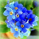 Forget-me-nots by ©The Creative  Minds
