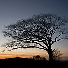 Raddon Hill top tree by peteton