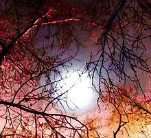 Abstraction color trees by NBeauty