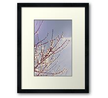 Spring is here again Framed Print