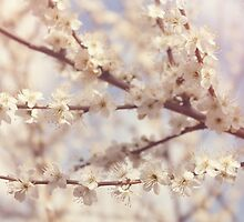 Blossom by blossom the spring begins by Nicola  Pearson