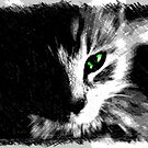 Feline Beauty in Charcoal by Lisa Taylor